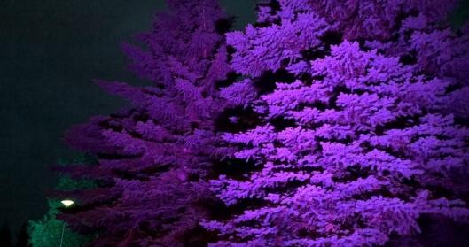 Upeasti valaistut puut poistumisreitillä Kirjurinluodolta Jazzkadulle.