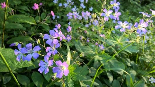Metsäreitiltä löytyy hyttysiä ja kukkasia.